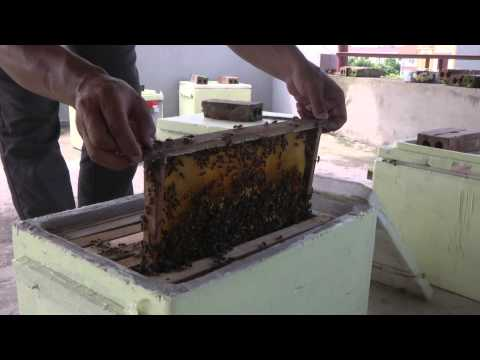 Sáng chế thùng xốp nuôi ong
