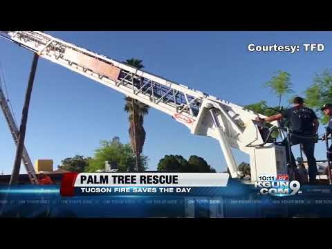 Firefighters rescue man trapped in palm tree