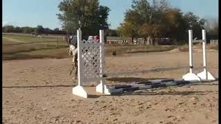 Tino- Eligible Green Small Pony For Sale