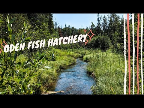 ODEN FISH HATCHERY | Exploring The Petoskey Area