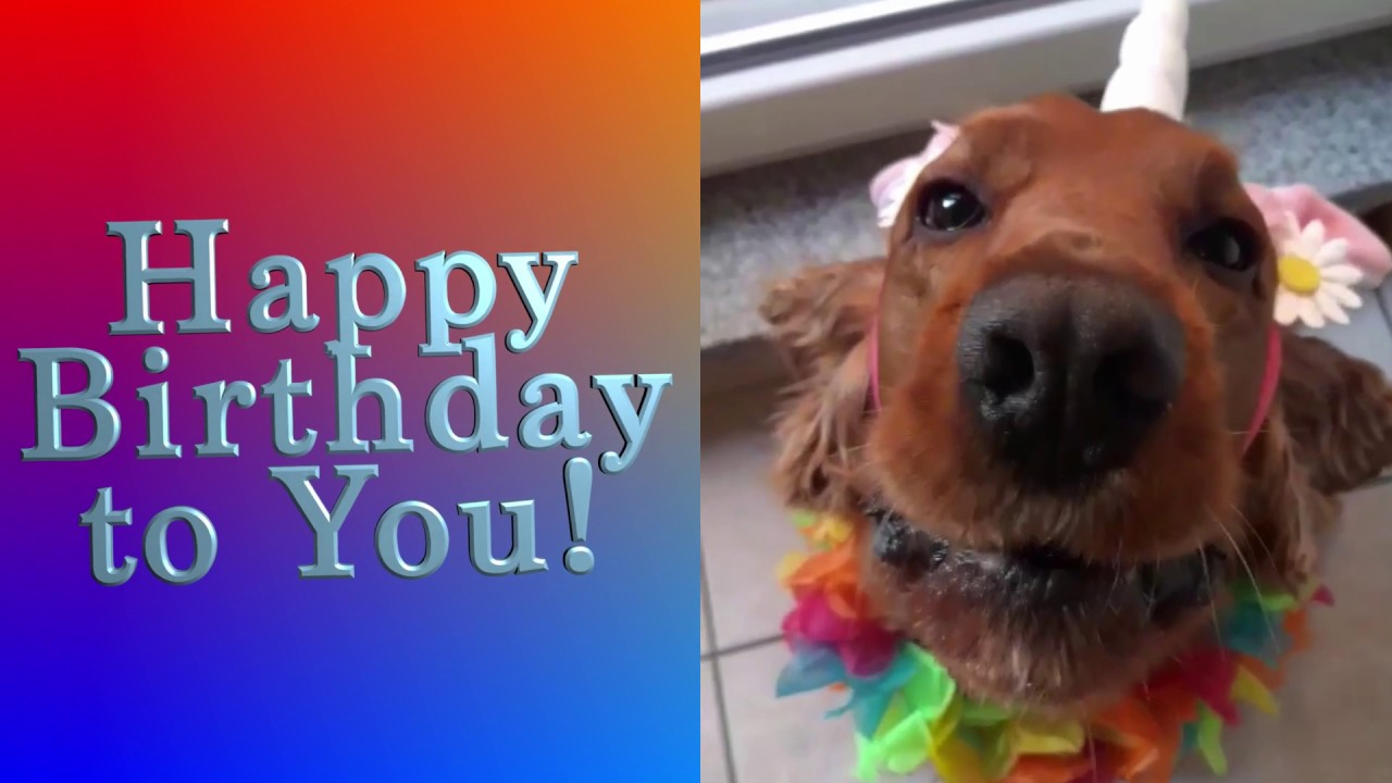 Cute Dog Singing The Happy Birthday Song Youtube