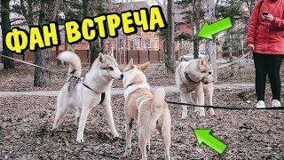 ФАН ВСТРЕЧА С ПОКЛОННИКАМИ! МНОГО НОВЫХ ЗНАКОМСТВ! Говорящая собака.