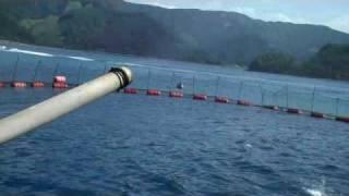 Japan Blue Fin Tuna Farm Amami, Island October 16, 2009