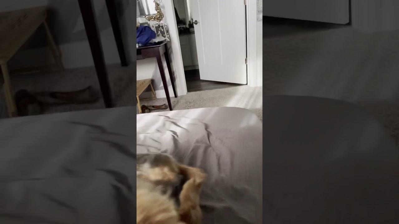 Doggie Alert