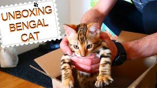 Unboxing Bengal Cat