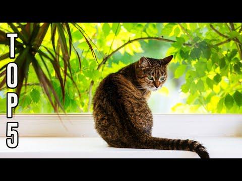 ✅ TOP 5: Best Cat Tree 2019