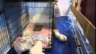 Puppy Potty Training Kennel