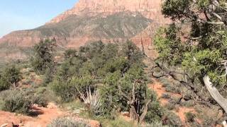 Zion National Park: The Watchman Trail