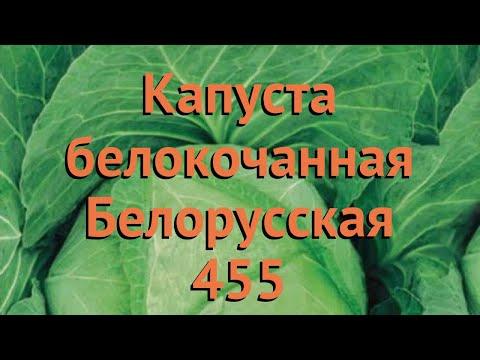 Капуста белокочанная Белорусская 455 🌿 обзор: как сажать, семена капусты Белорусская 455   белорусская_455   белокочанная   belorusskaya_455   капуста   обзор   бе
