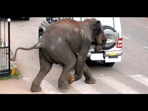 Elephant attacks in kerala - India Elephant attack in ...  Kerala Elephant Attack Youtube