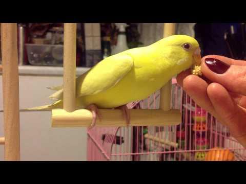 Принцесса Жёлтая Птичка кушает