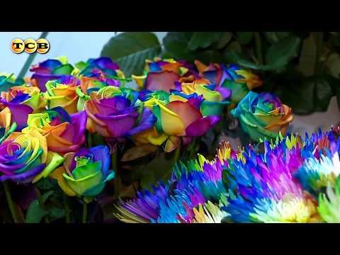 Разноцветные Радужные Розы