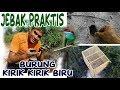 Jebak Praktis Burung Kirik Kirik Biru Modal Sangkar Kosong Asyiiik Buangeet  Mp3 - Mp4 Download