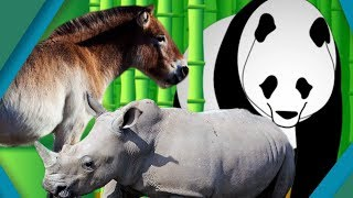 Animals That Were Saved From Extinction | Earth Unplugged