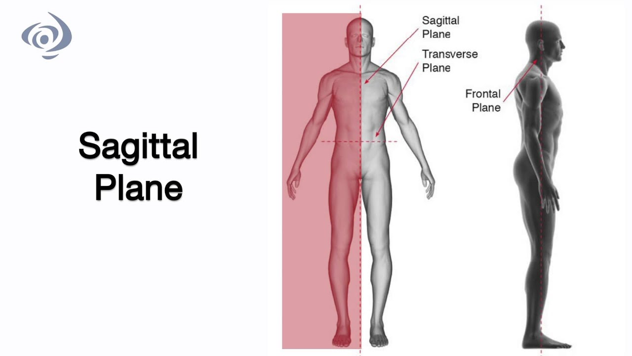 1. Movement of the Joints - YouTube