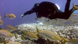 Underwater Sea animals Octopus and Fish, Water sound music Most amazing journey for Relaxing.