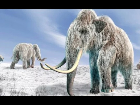 Woolly mammoth will be back from extinction within two years, say Harvar...