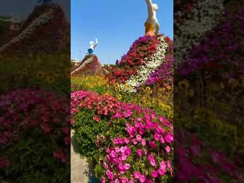 Dubai Miracle Garden Beautiful Flowers 💐