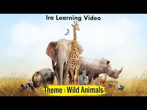 Wild Animals Names | Wild Animals | Animal Video for Kids | Learn Wild Animals