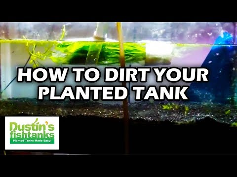 How To Set Up A Planted Tank, How To Use Dirt In Your Planted Tank Substrate, Dirted Tank Tips