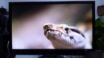 Trải nghiệm màn hình ViewSonic VG2401mh qua video 4k