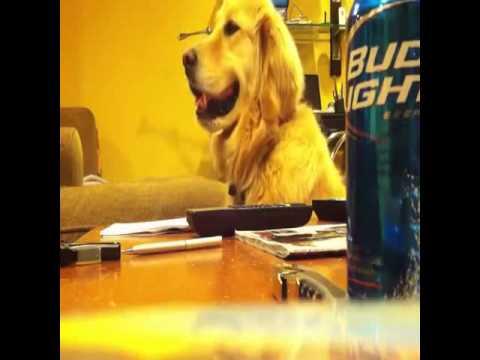 Dog Loves Music Vine    Funny Dog Vines   vine youtube