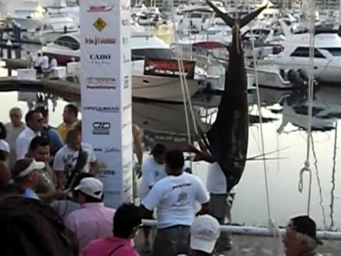 Yellowfin Tuna Winner Day #2 Puerto Vallarta Fishing Tournament 11/13/09
