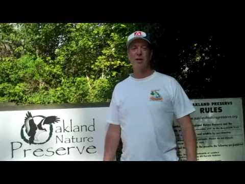 OAKLAND, FLORIDA   NATURE WALK