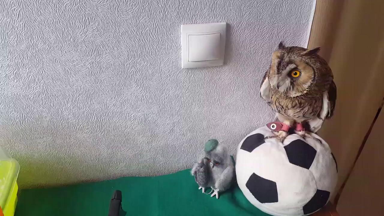 Филин это сова,Ушастая сова это не Филин.