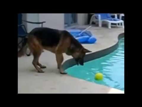 笑える   面白   面白い犬陽気なプールは、コンパイルに失敗します!
