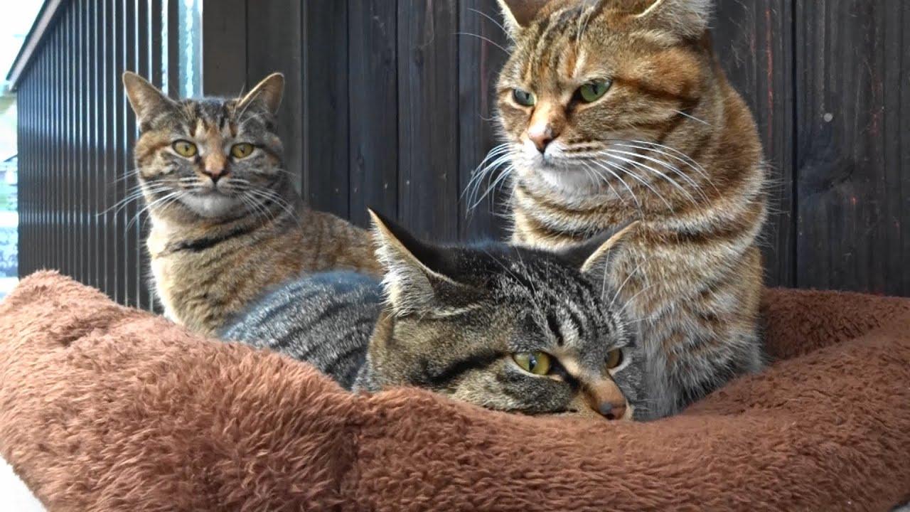 野良猫親子と遭遇 ( 写真 ) - Reiji Muramatsu:Nikonと時々Leica - Yahoo