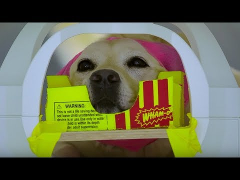 Dog MRI - Studying The Dog Brain - Inside the Animal Mind - BBC