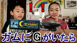 もしもガムにゴキブリが入っていたら?! Rino&Yuuma