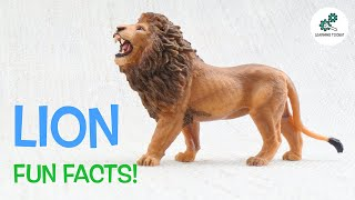 LION FACTS! | Fun & Educational | For Kids | Best Animal Facts | From Learning Toolkit