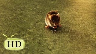 Зелёная миля — «Маленький мышонок оказался умнее трёх мужиков» - эпизоды, цитаты из к/ф (2/12)