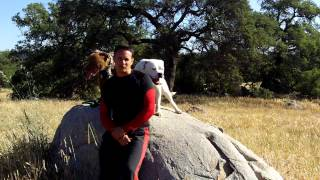 Kingsley Rhobh Real Housewives Beverly Hills Season 4 Full Video No Edit Dog Training