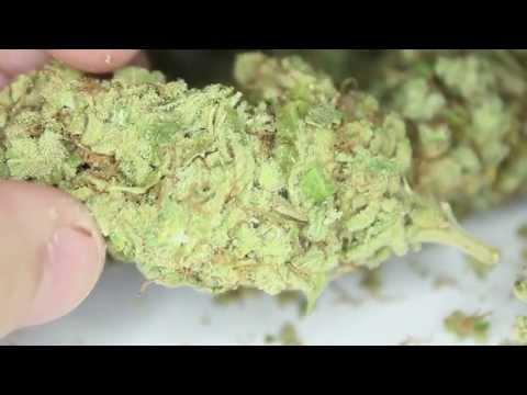 """Sour Diesel"" Marijuana Montréal HD"