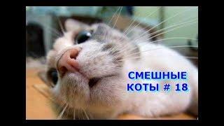Приколы с кошками и котами #18. Подборка смешных и интересных видео с котиками и кошечками 2017