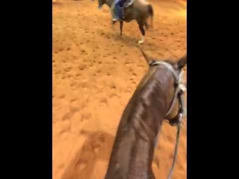 Talking horse literally