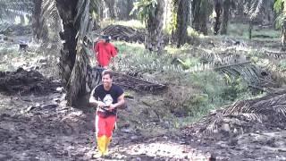 Download Video Tki mesum di kebun sawit MP3 3GP MP4