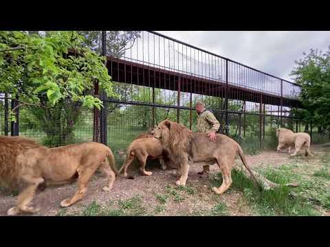 ХОРОШИЕ НОВОСТИ ,  интервью среди львов !