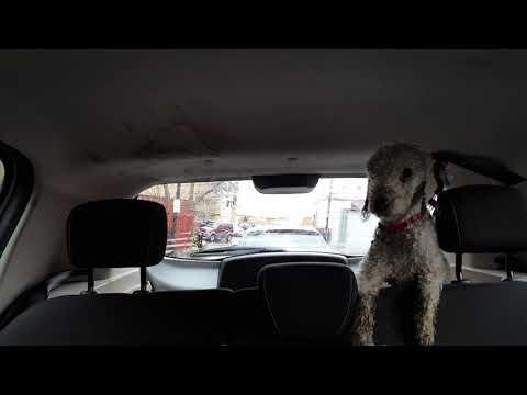 Crazy Wiper Dog