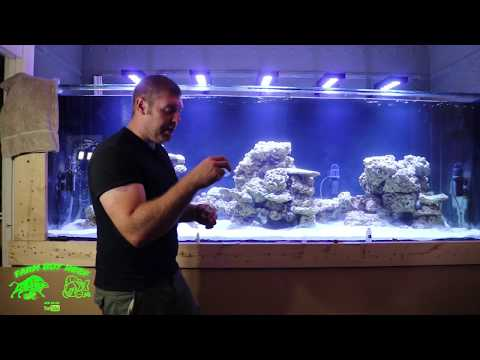 Cycling the 700 gallon phoenix reef tank Part #2 with Genesis