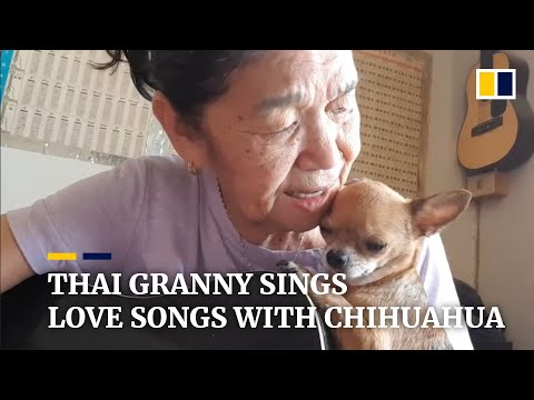 Thai granny sings love songs with chihuahua, becomes internet star