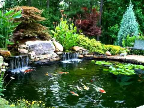 tropical landscape ideas - water