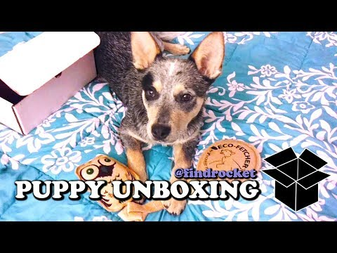 Puppy Unboxing #12 - Eco-Friendly Toys