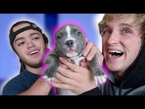 Thumbnail: THE NEWEST MEMBER OF THE FAMILY! **Puppy Alert**
