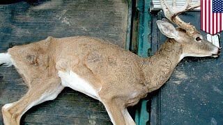 Fort collins, colorado — a mysterious neurological disease is laying waste to north american deer, and scientists worry humans are next. subscribe tomonew...