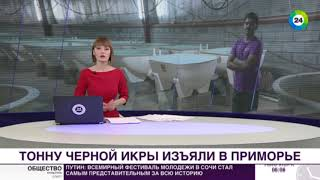 Улов на 50 млн: в Комсомольске-на-Амуре изъяли тонну черной икры - МИР24