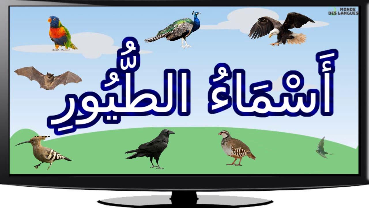 اسماء و انواع الطيور بالصور مع اصواتها Youtube
